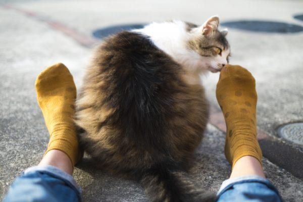 足のニオイを嗅ぐ猫