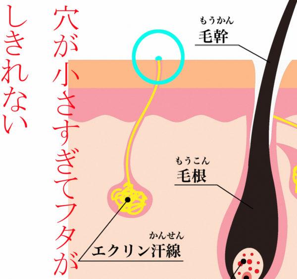 エクリン腺のフタ